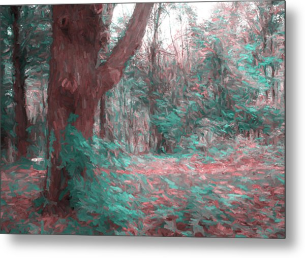 Emmaus Community Park Trail With Large Tree Metal Print