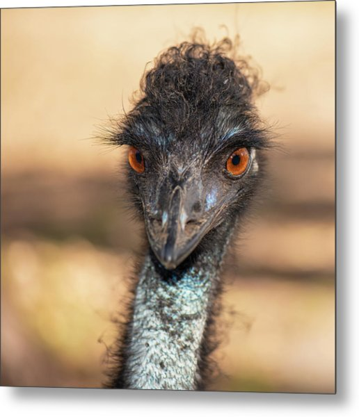 Emu By Itself Outdoors During The Daytime. Metal Print