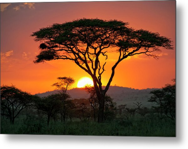 End Of A Safari-day In The Serengeti Metal Print by Guenterguni