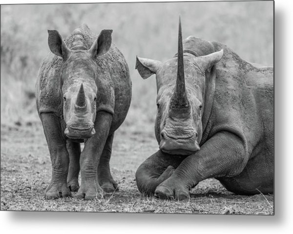 Endangered Duo Metal Print