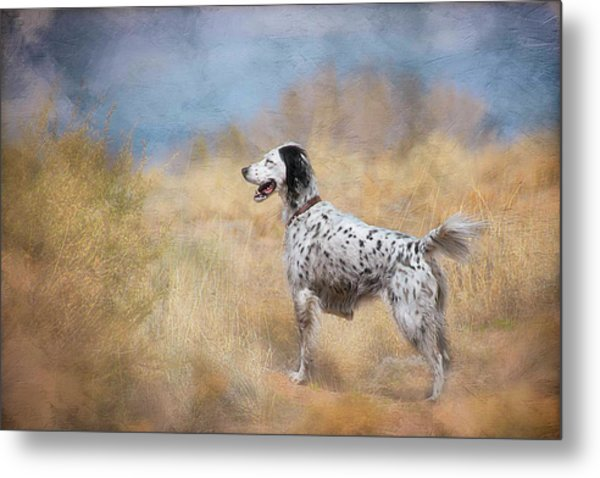 English Setter Dog Metal Print