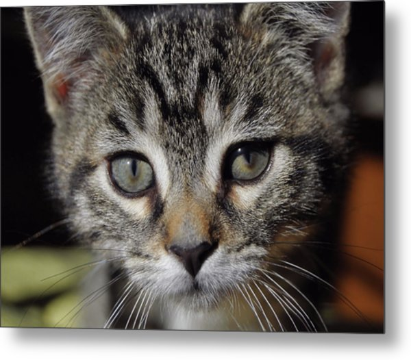 Esme Metal Print by JAMART Photography