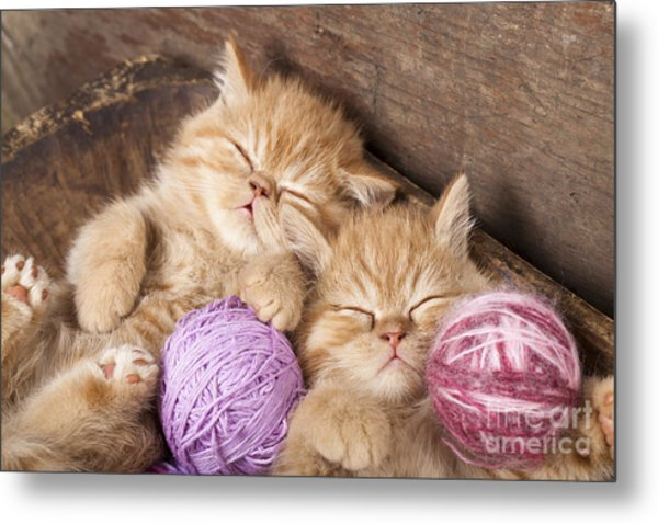 Exotic Kittens   Sleeping With A Ball Metal Print