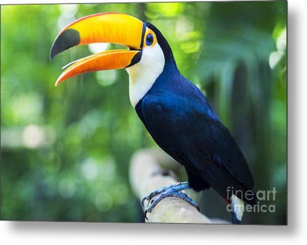 Exotic Toucan Bird In Natural Setting Metal Print