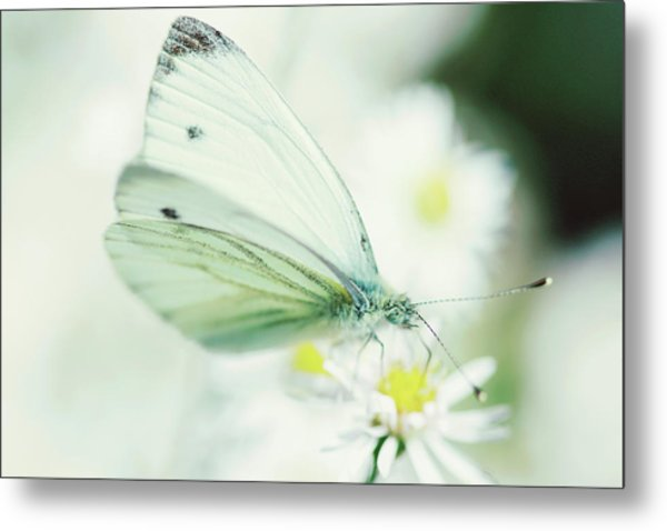 Extreme Close Up Of White Butterfly & Metal Print by Les Hirondelles Photography