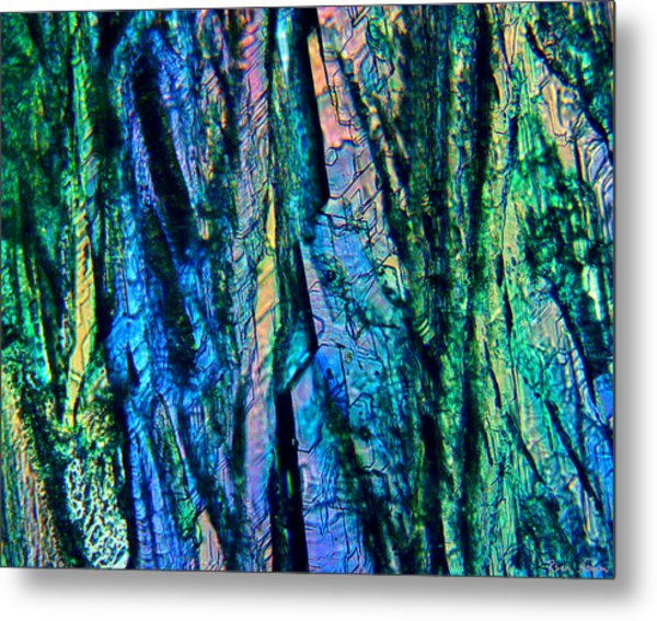 Metal Print featuring the photograph Fading Splendor by Rein Nomm