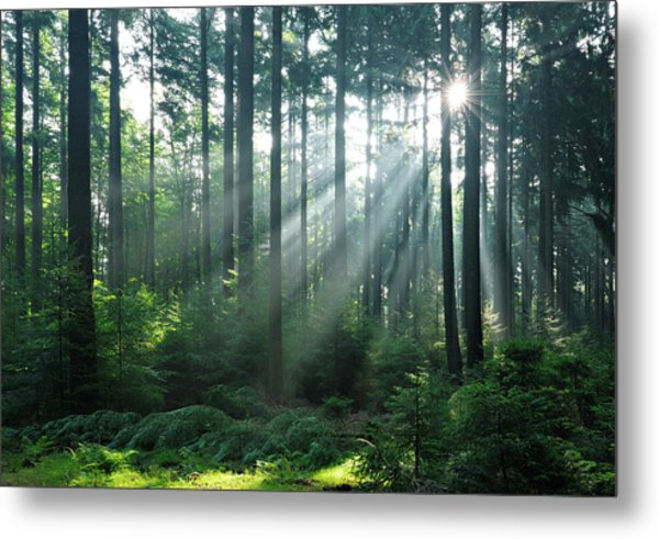 Fairytale Forest - Sunbeams In Natural Metal Print by Avtg