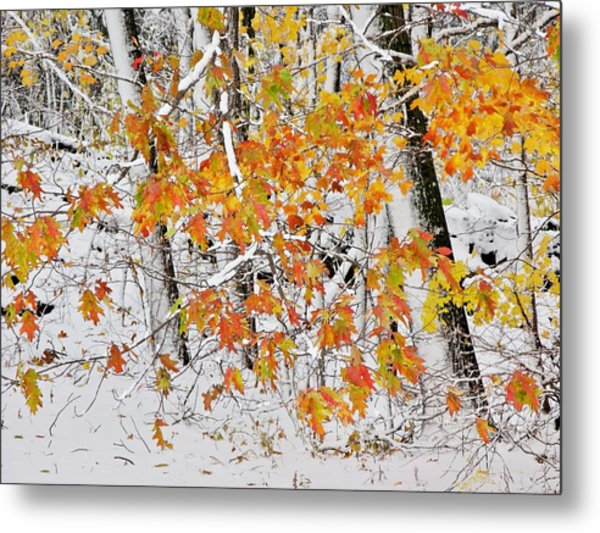 Fall And Snow Metal Print