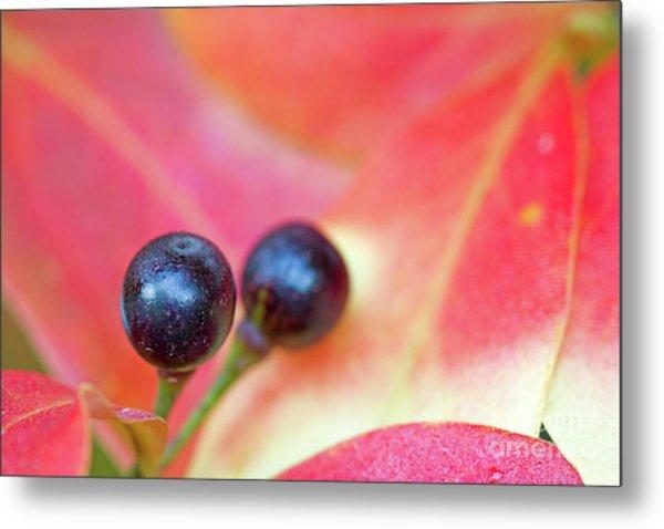 Fall Berries Metal Print by Steven Dillon
