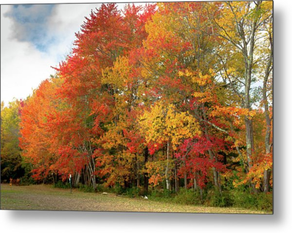 Metal Print featuring the photograph Fall Colors by Doug Camara