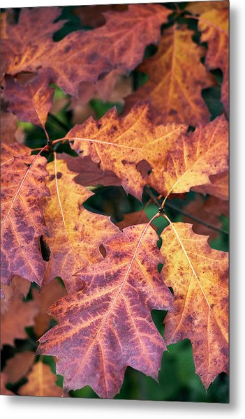 Metal Print featuring the photograph Fall Flames by Whitney Goodey