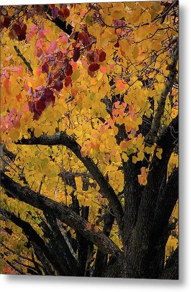 Fall In Carlyle Metal Print