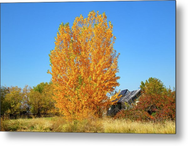 Metal Print featuring the photograph Fall In Idaho by Dart and Suze Humeston