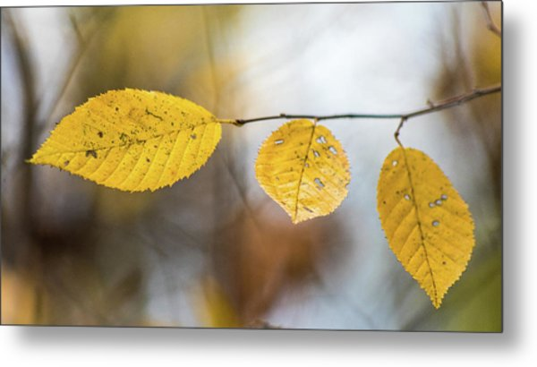 Metal Print featuring the photograph Fall In Triplicate by Michael Arend