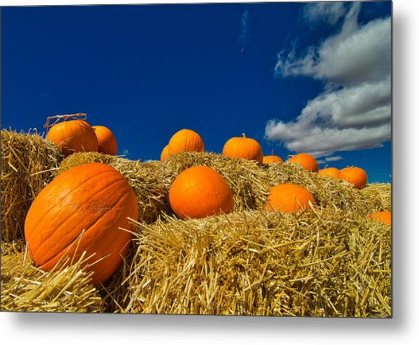 Fall Pumpkins Metal Print