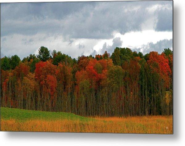 Fall Trees Off Rte 23a Metal Print