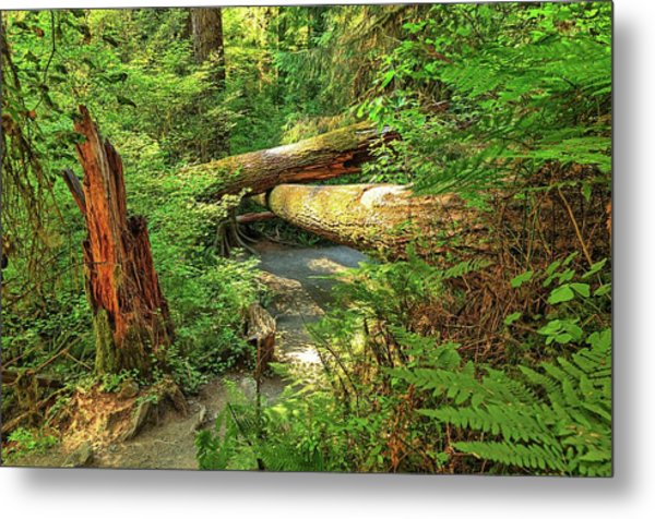 Fallen Trees In The Hoh Rain Forest Metal Print