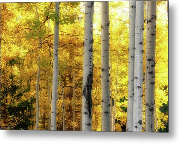 Fall's Visitation Metal Print