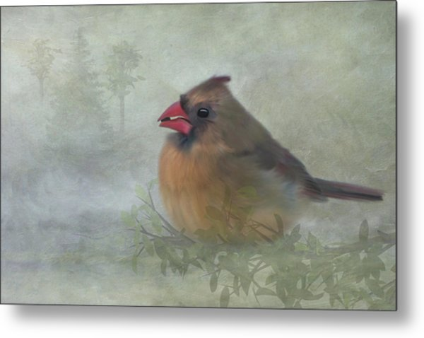 Female Cardinal With Seed Metal Print