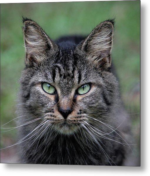 Feral Cat Metal Print