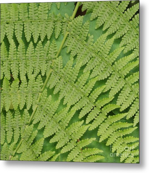 Fern Fronds Over Green Leaf Metal Print