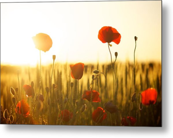 Field Of Poppies At Dawn Metal Print