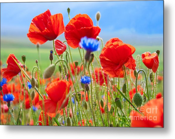 Field Of Wild Poppies And Other Flowers Metal Print