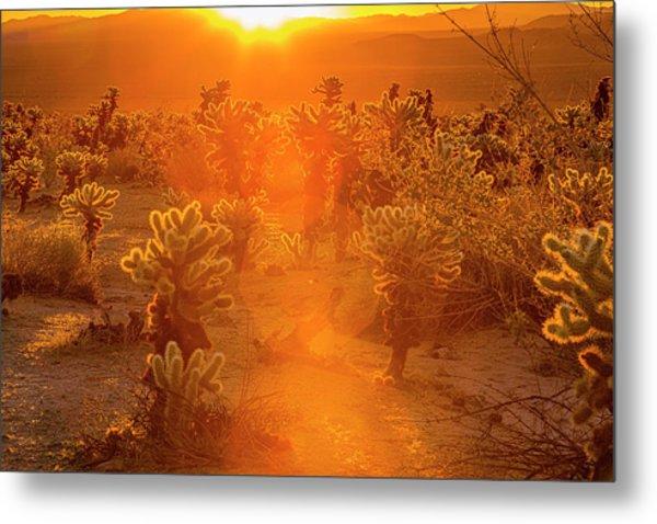 Fiery Sunrise Among The Cacti Metal Print