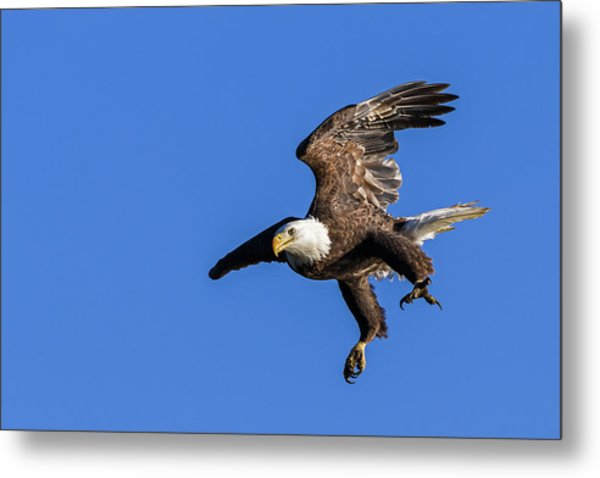 Metal Print featuring the photograph Final Approach by Lori Coleman