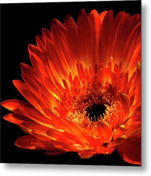Fire In The Shade Metal Print