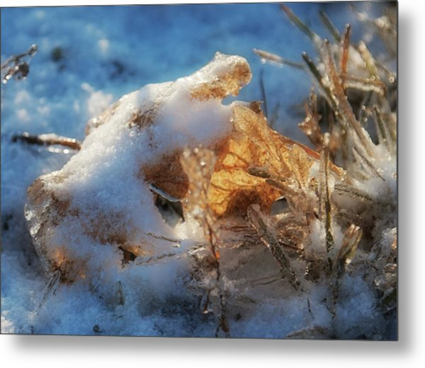 Metal Print featuring the photograph First Snow, Leaves And Light by Tatiana Travelways