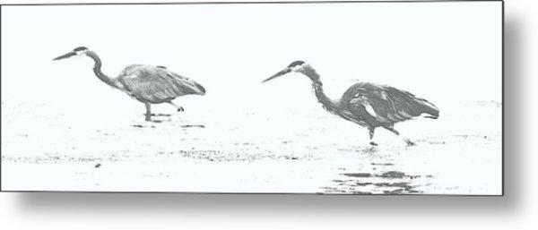 Fishing Blue Herons Metal Print