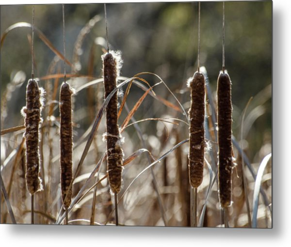 Metal Print featuring the photograph Five Cattails by Rob Huntley