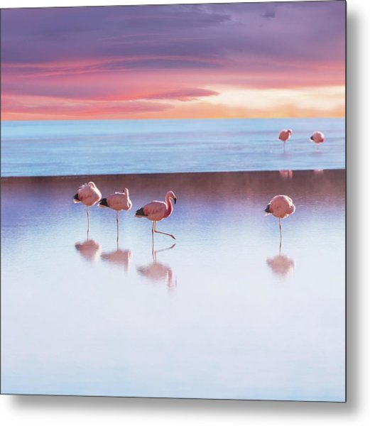 Flamingoes In Bolivia Metal Print by Ingram Publishing