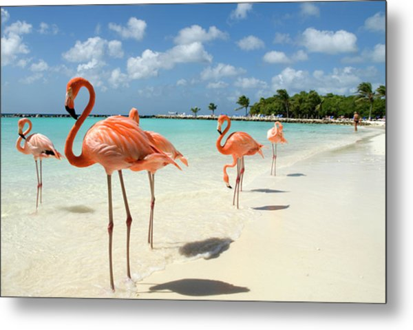 Flamingos On The Beach Metal Print by Vanwyckexpress