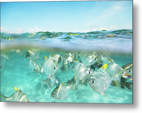Flock Of Fish Under And Above Water Metal Print by Danilovi
