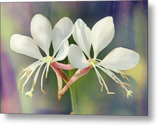Metal Print featuring the photograph Floral Palette I by Leda Robertson