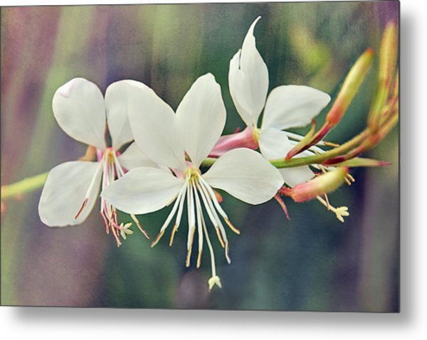 Metal Print featuring the photograph Floral Palette II by Leda Robertson