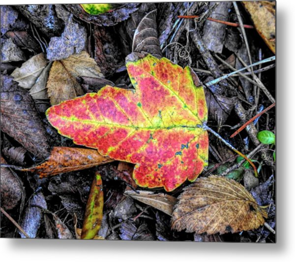Florida Foliage Metal Print