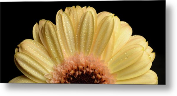Metal Print featuring the photograph Flower by Mirko Chessari