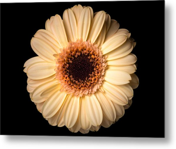 Metal Print featuring the photograph Flower Over Black by Mirko Chessari
