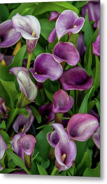 Flower Patterns Collection Set 08 Metal Print