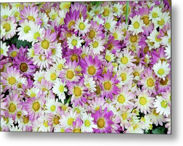 Flower Patterns Collection Set 10 Metal Print