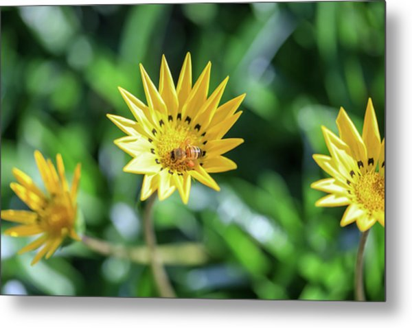 Yellow Flowers And A Bee Metal Print