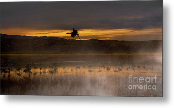 Flying Over Crane Pond Metal Print
