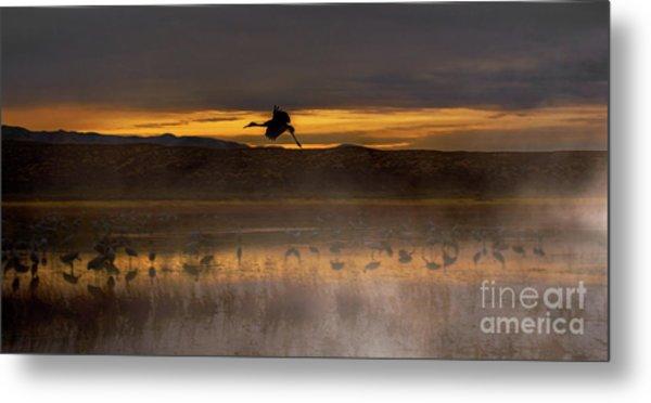 Flying Over Crane Pond Metal Print