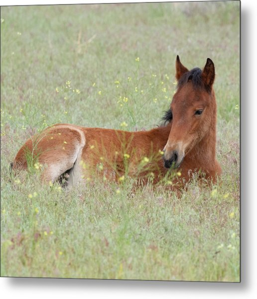 Foal In The Flowers Metal Print