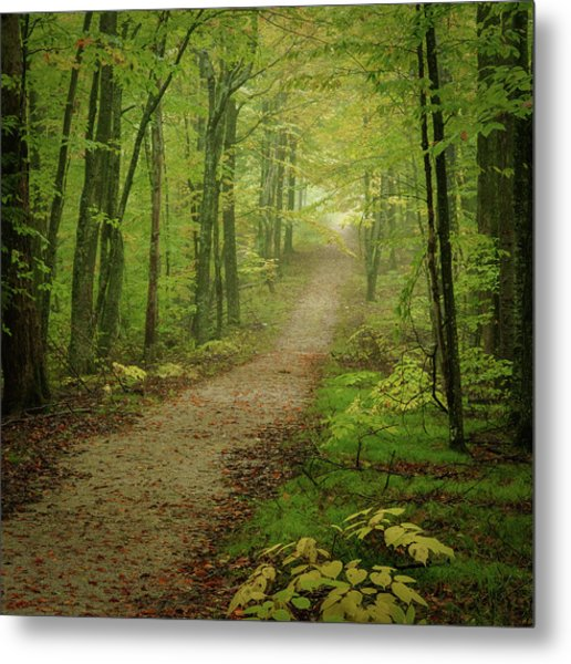 Foggy Path Metal Print