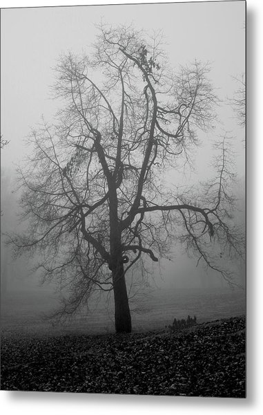 Foggy Tree In Black And White Metal Print