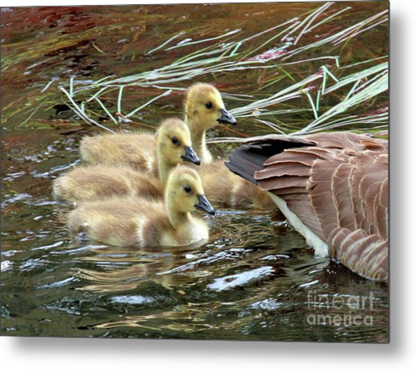 Following Mom's Lead Metal Print